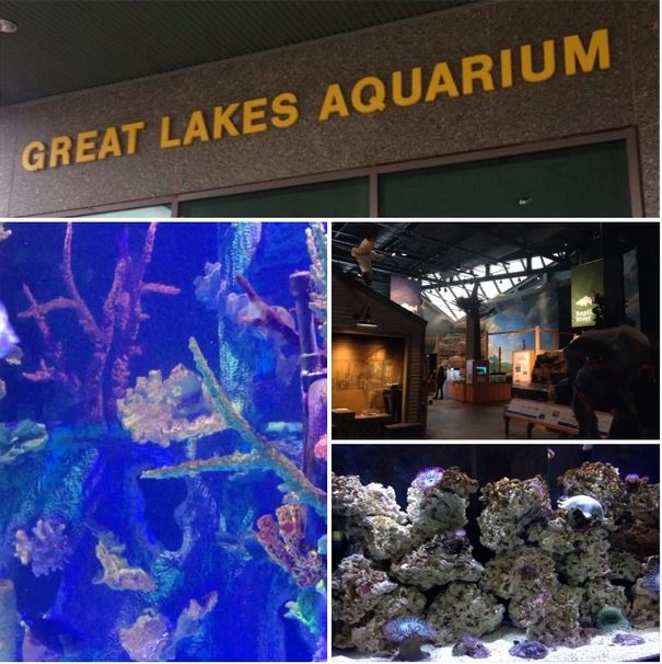 Great Lakes Aquarium